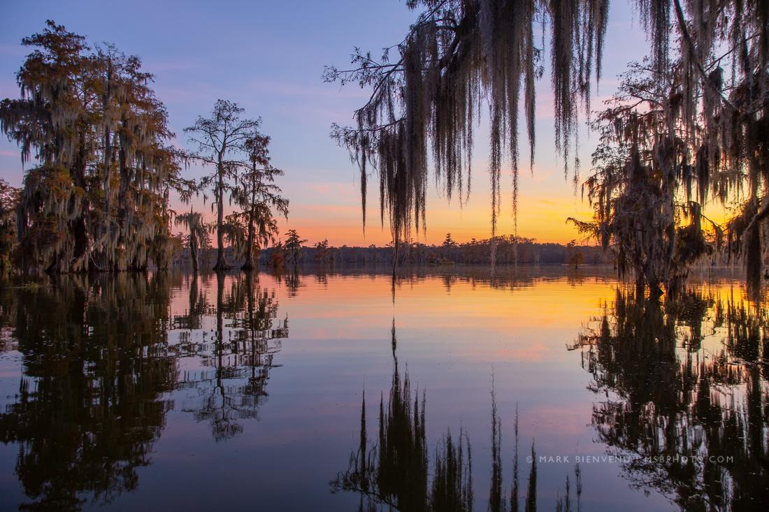Lake Martin Cypress | Louisiana Landscape Photographer Mark Bienvenu