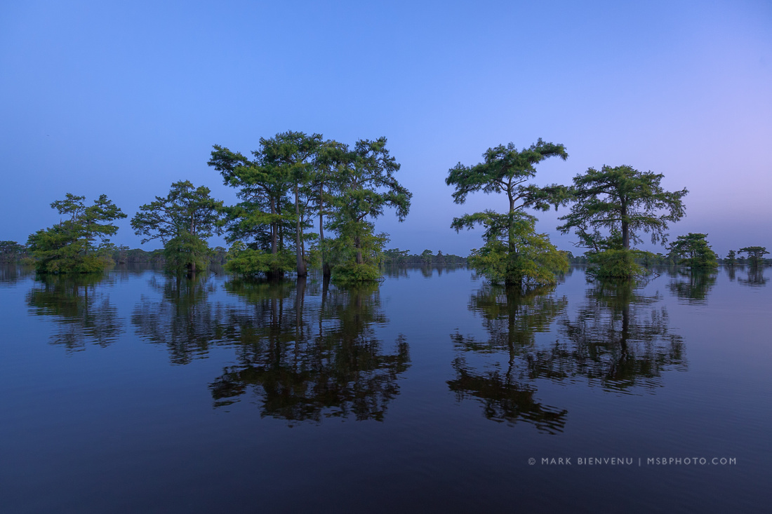 Henderson Swamp | Louisiana Landscape Photographer Mark Bienvenu