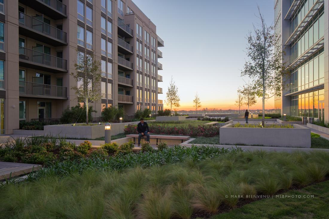 IBM Rooftop Terrace wins ASLA Award   Landscape Architecture Photographer Mark Bienvenu