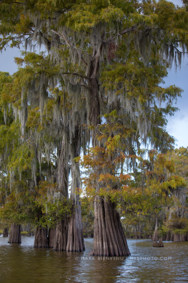 Henderson Swamp   Louisiana Landscape Photographer Mark Bienvenu