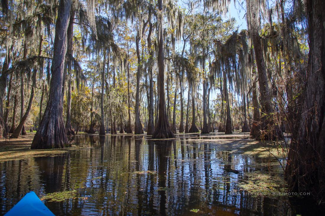 Lake Martin | Louisiana Landscape Photographer Mark Bienvenu