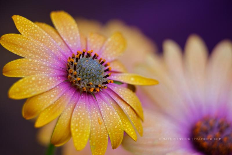 IMAGE: http://www.msbphoto.com/img/s11/v37/p8102902-4.jpg
