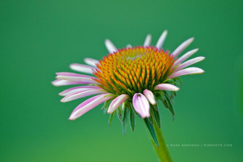 IMAGE: http://www.msbphoto.com/img/s3/v23/p7387387-4.jpg